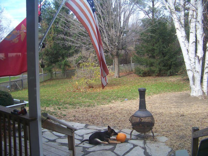 Sarge and pumpkin